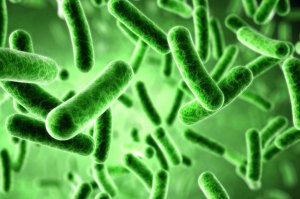 bacterias-computadoras